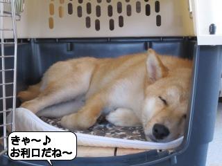 くうちゃん0617 010