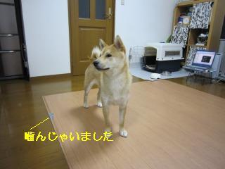 くうちゃん0619 018