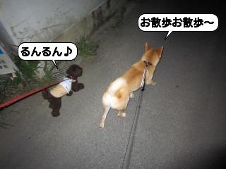 くうちゃん0718 065
