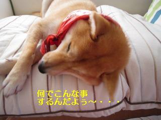 くうちゃん0718 011