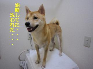 くうちゃん0718 002