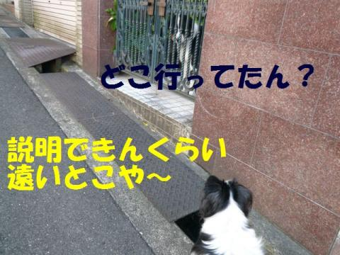 P1050167.jpg