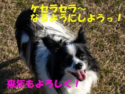 P2014846.jpg