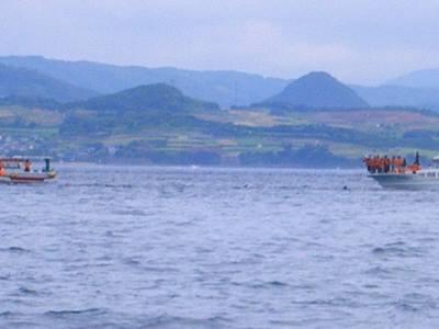 イルカウォッチング2
