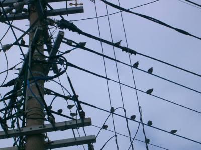 小鳥の群れ