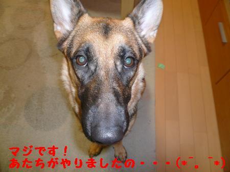 繝ゥ繧、繧「繝ェ繧ケ・「3+107_convert_20091119001558