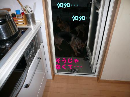 繝ゥ繧、繧「繝ェ繧ケ・「3+328_convert_20100101013716