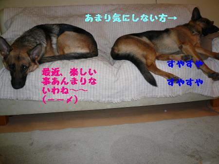 繝ゥ繧、繧「繝ェ繧ケ・「3+412_convert_20100112204814