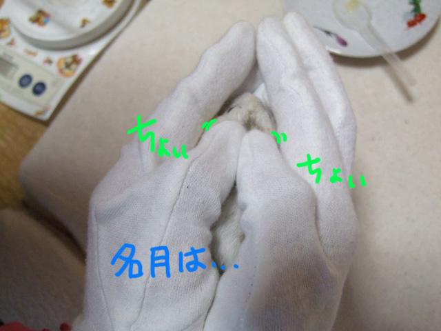 DSCF130329a6043.jpg