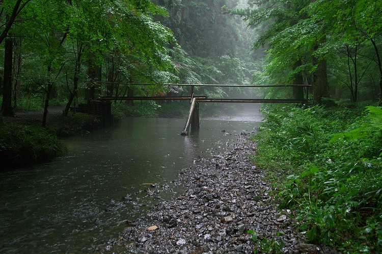 雨降る小国の森