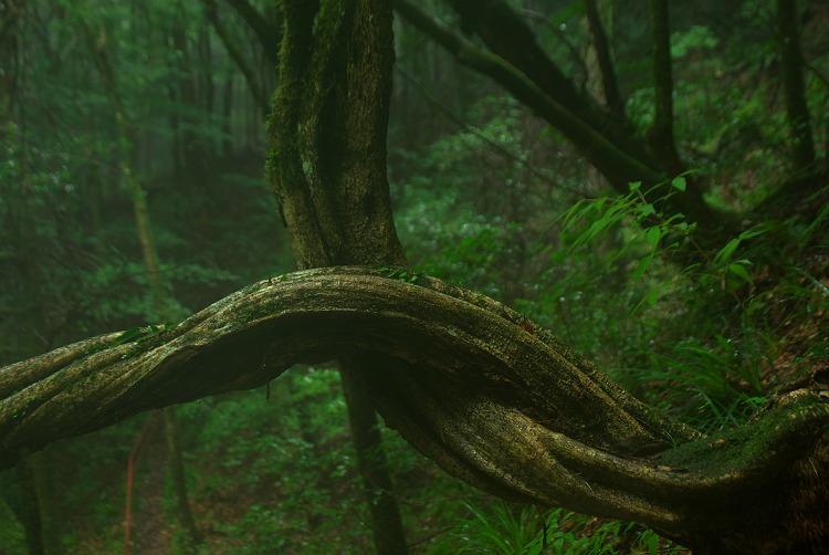 奥三河の森
