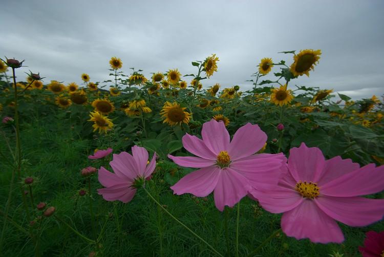 秋の花風景 1