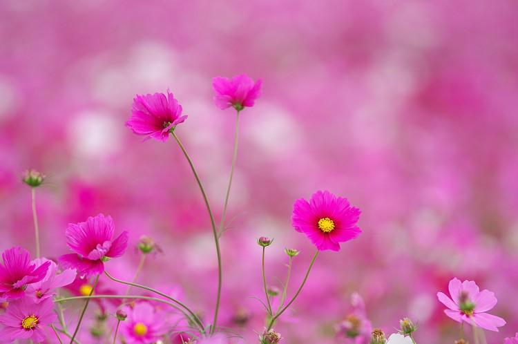 秋の花風景 2