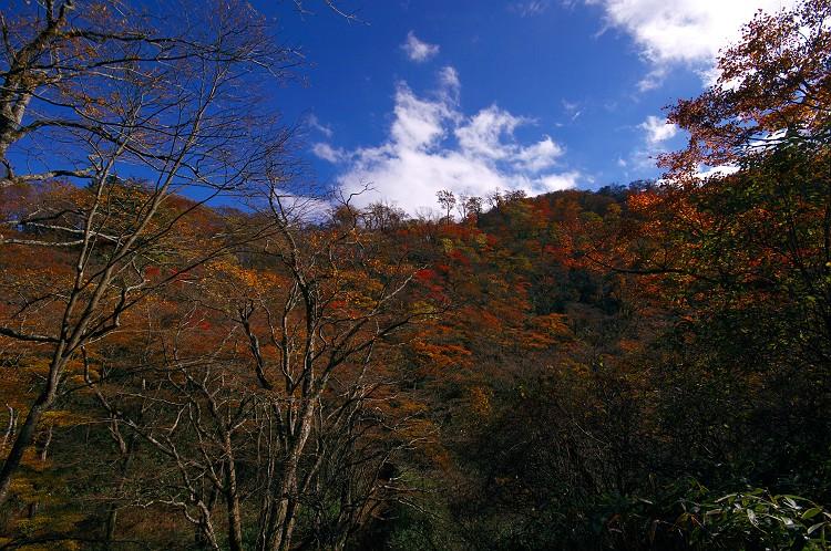 安倍峠の秋