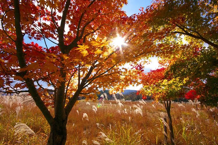 秋への誘い(いざない)