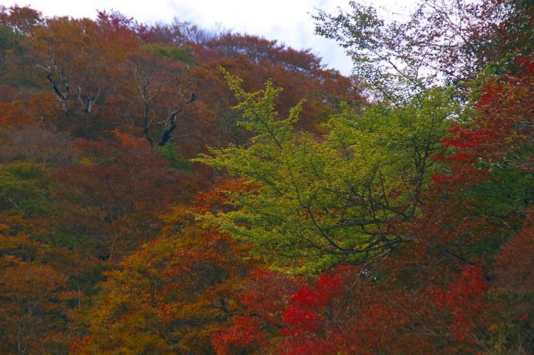 安倍峠の秋 3