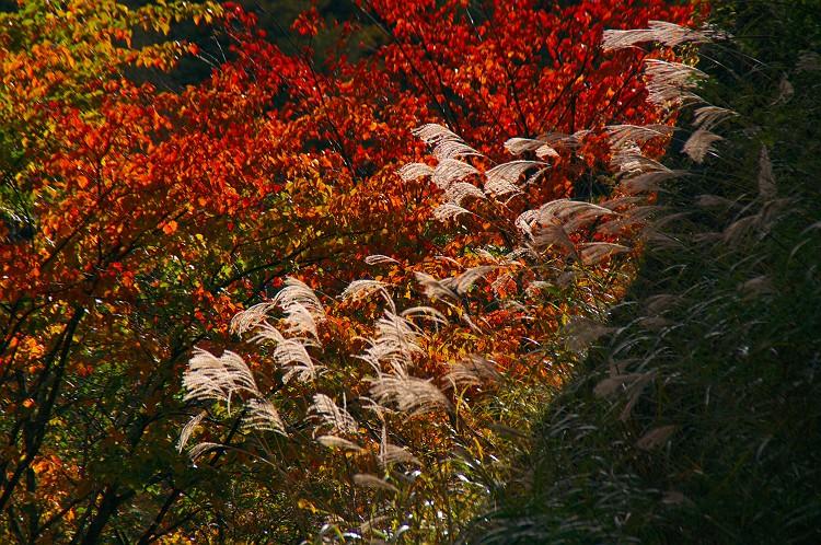 安倍峠の秋 4