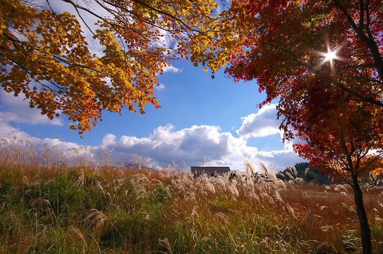 秋の光に誘われて