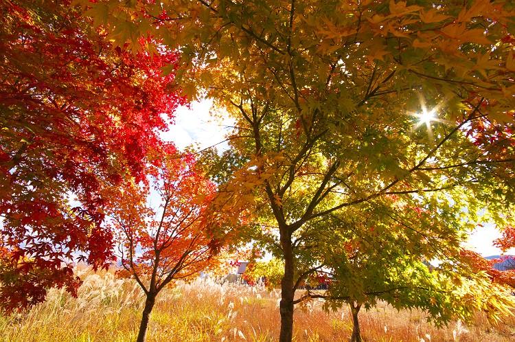 秋の光に誘われて 2