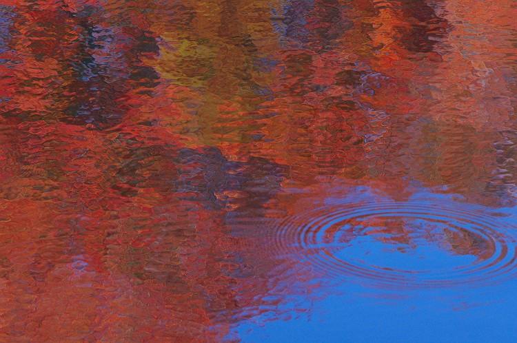 秋の雫 ~森林公園の紅葉 2~