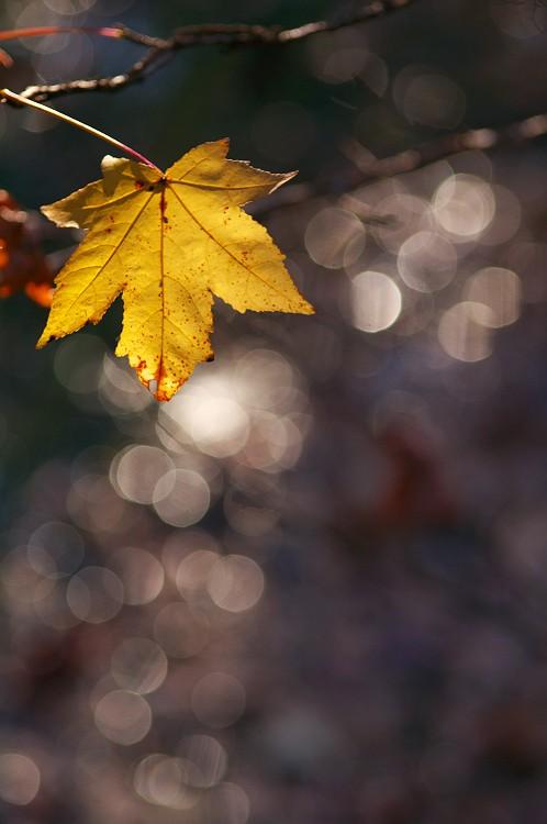 森林公園の紅葉 4