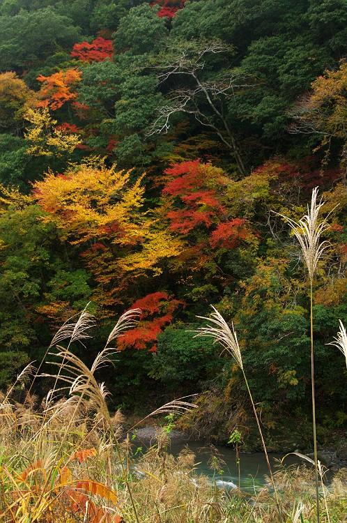 川根の秋 2
