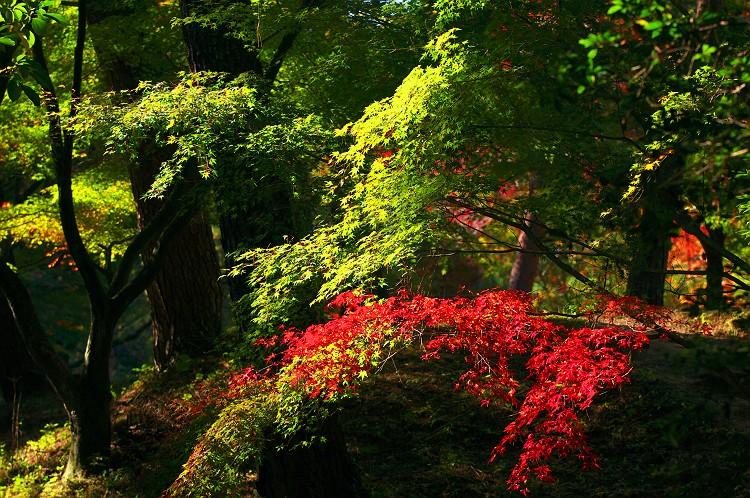 森林公園の紅葉 5