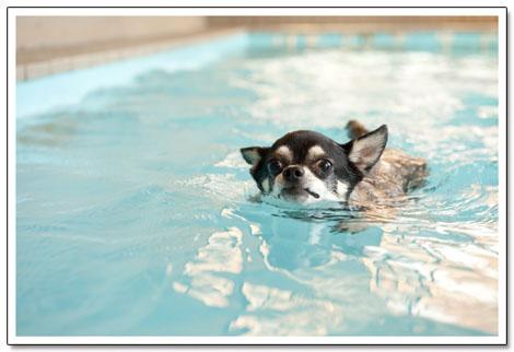 世界水泳大会の日本代表ワンコです。2