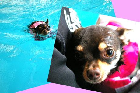 世界水泳大会の日本代表ワンコです。5