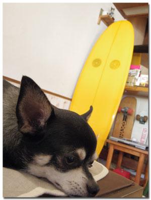 ワンコと伊豆旅行 下田でランチ&お散歩編 【cafe cubstar】3
