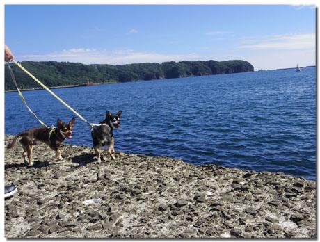 ワンコと伊豆旅行 下田でランチ&お散歩編 【cafe cubstar】6