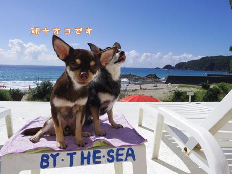 ワンコと伊豆旅行 帰り道はグッスリ&NG集17