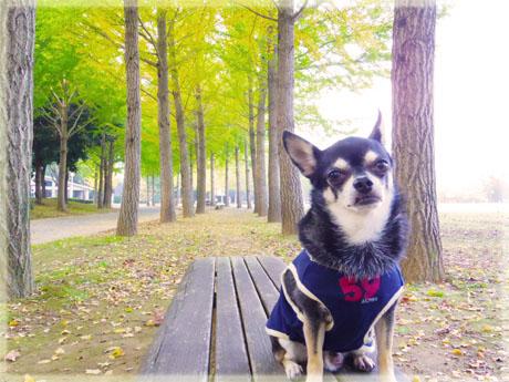 公園でモデル気分。3
