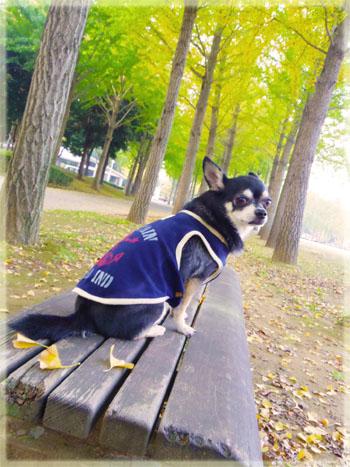 公園でモデル気分。4