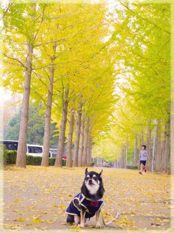 公園でモデル気分。7