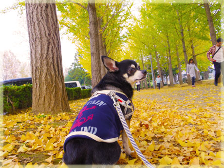 公園でモデル気分。8