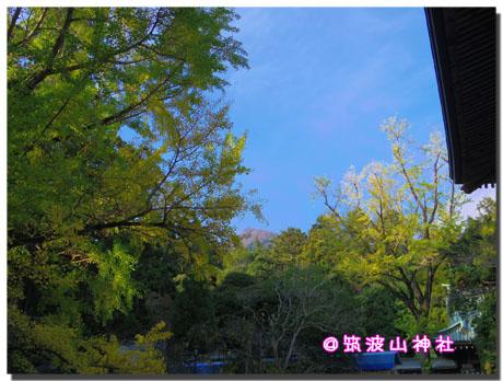 筑波山神社の秋。~イチョウ編~3