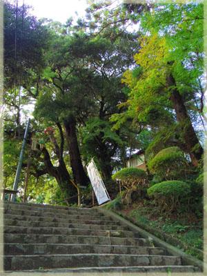 筑波山神社の秋。~イチョウ編~9