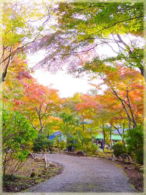 筑波山神社の秋。~もみじ編~1