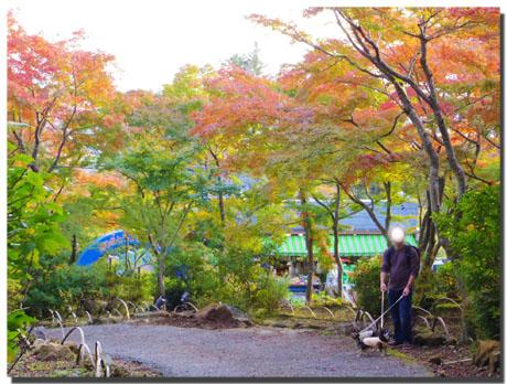 筑波山神社の秋。~もみじ編~3