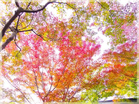 筑波山神社の秋。~もみじ編~4