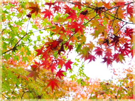 筑波山神社の秋。~もみじ編~6