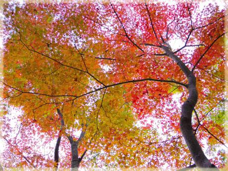 筑波山神社の秋。~もみじ編~7