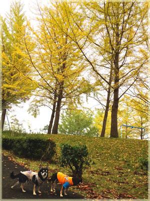 黄色のじゅうたん&ワンピースのストラップ。1