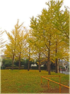 黄色のじゅうたん&ワンピースのストラップ。3