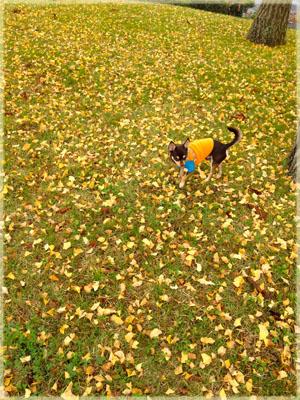 黄色のじゅうたん&ワンピースのストラップ。4
