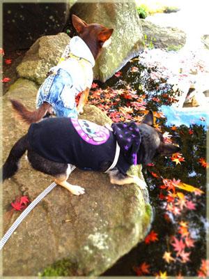 池に浮かぶモミジに釘付け!7