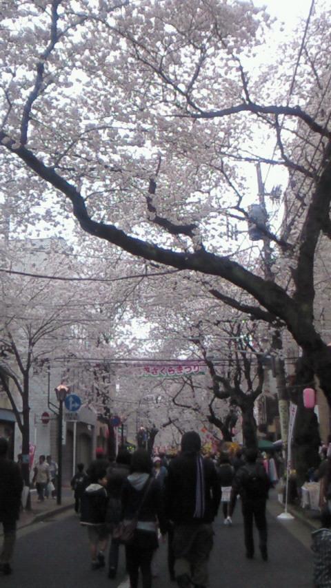 桜4.4(3)
