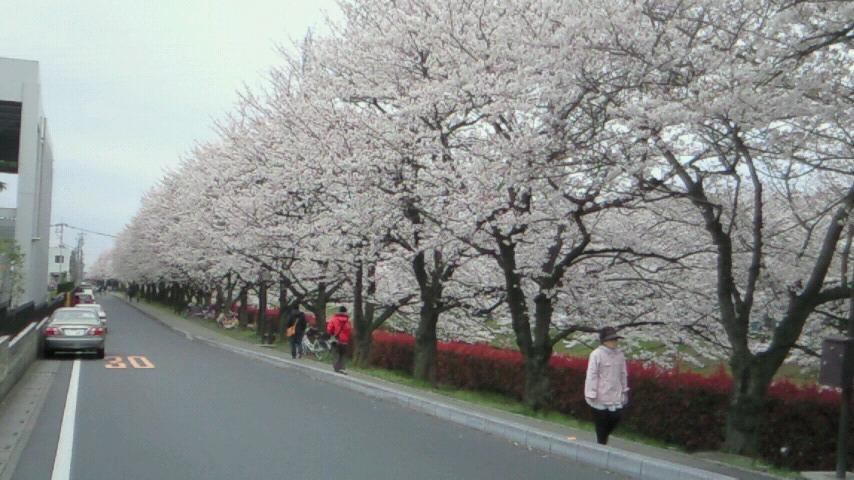 桜4.4(5)