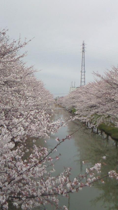 桜4.4(1)
